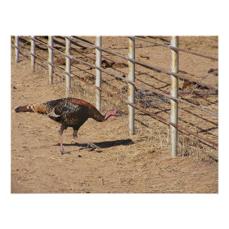 Turkey Ready For Fence Dive Poster