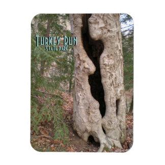 Turkey Run State Park, Hallow Tree Rectangular Photo Magnet