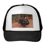 turkey, thanksgiving hat