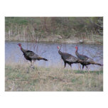 Turkey Trio By Water Posters