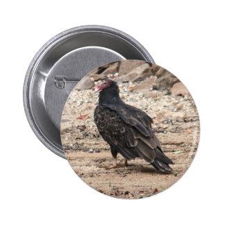 Turkey Vulture Buttons