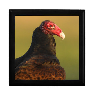 turkey vulture gift box
