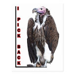 Turkey Vulture I Pick Back Posterized Photo Postcard