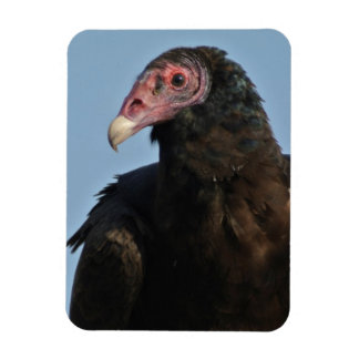 Turkey Vulture Magnet