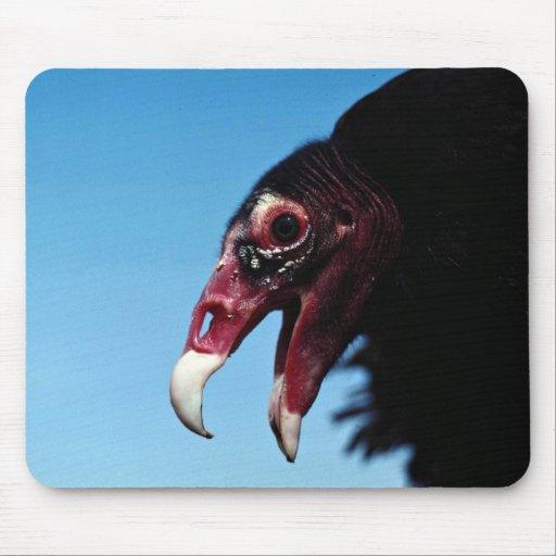 Turkey vulture mouse pad