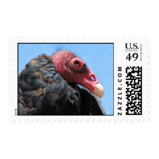 Turkey Vulture Postage