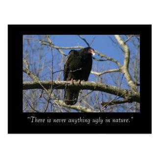 Turkey Vulture Postcard