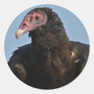 Turkey Vulture Stickers