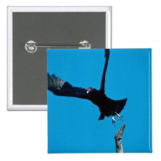 Turkey vulture taking off pins