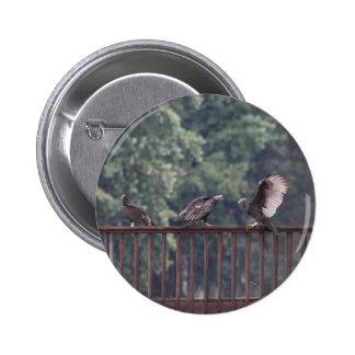Turkey Vultures Button