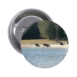 Turkey Vultures Sitting Around At The Pond. Pinback Buttons