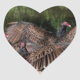 Turkey Vultures With Spread Wings Heart Sticker