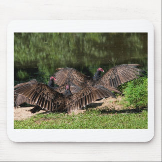 Turkey Vultures With Spread Wings Mouse Pad