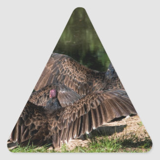 Turkey Vultures With Spread Wings Triangle Sticker
