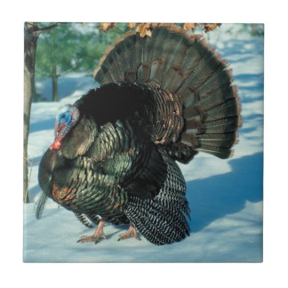 Turkey Walks In Snow Thanksgiving Christmas Winter Tile