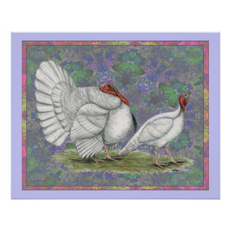 Turkey:  White Holland Pastel Poster