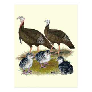Turkeys Eastern Wild Family Postcard