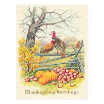 Turkeys Farm Pumpkin Apples Tree Fall Leaves Postcard