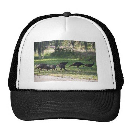 Turkeys Hat