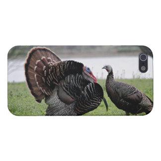 Turkeys iPhone 5 Case - Savvy