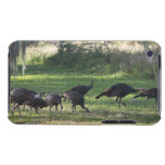 Turkeys iPod Case-Mate Case