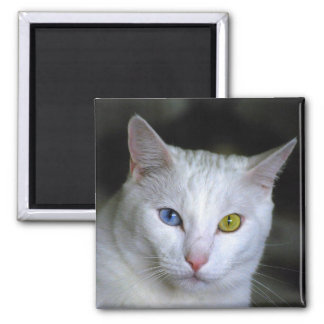 Turkish Angora Cat Magnet