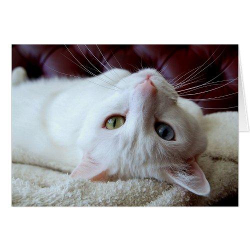 Turkish Angora Cat Odd Eyes Card