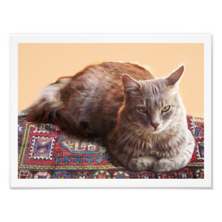 TURKISH CAT ON THE OLD CARPET PHOTO PRINT