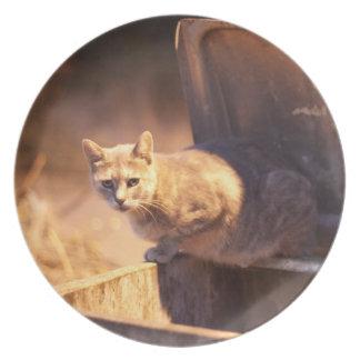 Turkish Cat Plate