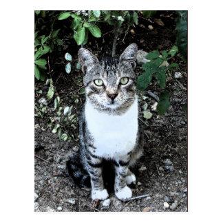 TURKISH CAT RONIN IN THE GARDEN POSTCARD