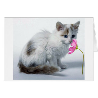 TURKISH VAN WANTS TO CELEBRATE YOUR BIRTHDAY CARD