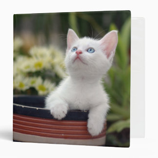 Turkish White Kitten (2.5 Months Old ) 3 Ring Binder