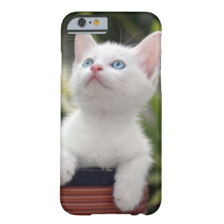 Turkish White Kitten (2.5 Months Old ) Barely There iPhone 6 Case