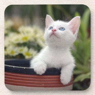 Turkish White Kitten (2.5 Months Old ) Drink Coaster