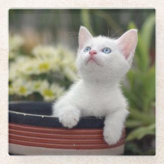 Turkish White Kitten (2.5 Months Old ) Glass Coaster