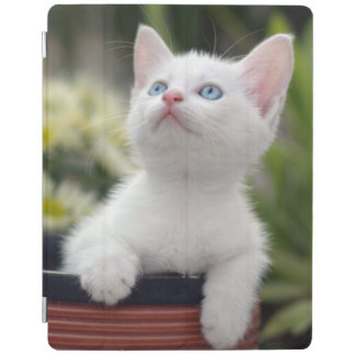 Turkish White Kitten (2.5 Months Old ) iPad Smart Cover
