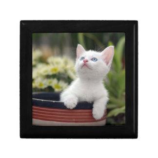 Turkish White Kitten (2.5 Months Old ) Jewelry Box