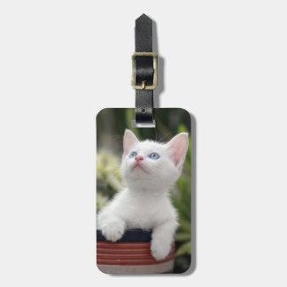 Turkish White Kitten (2.5 Months Old ) Luggage Tag