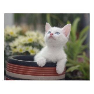 Turkish White Kitten (2.5 Months Old ) Panel Wall Art