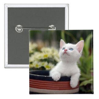 Turkish White Kitten (2.5 Months Old ) Pinback Button