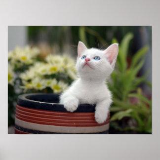 Turkish White Kitten (2.5 Months Old ) Poster