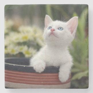 Turkish White Kitten (2.5 Months Old ) Stone Coaster