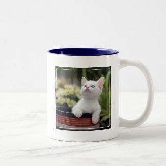 Turkish White Kitten (2.5 Months Old ) Two-Tone Coffee Mug