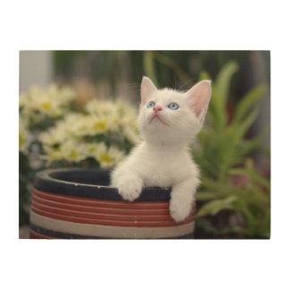 Turkish White Kitten (2.5 Months Old ) Wood Print