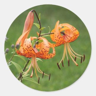 Turk's Cap Lily Round Stickers