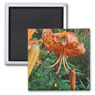 Turk's Cap Lily Wildflower Magnet
