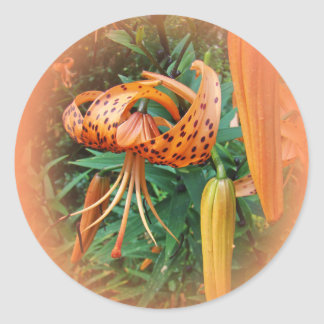 Turk's Cap Lily Wildflower Stickers
