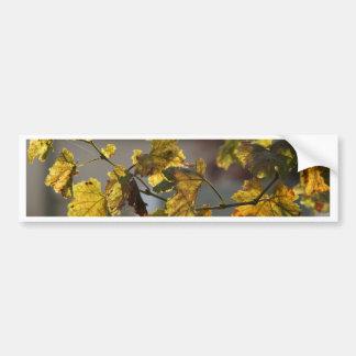 turning leaves bumper sticker