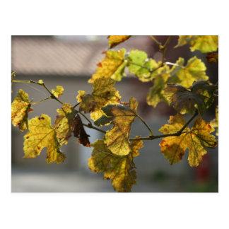Turning Leaves Postcard