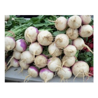 Turnip Pile Postcard